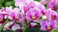 Samedi 16 octobre de 10h à 12h Au CSC de l'Allée Verte Ouvert à toutes et à tous Gratuit Inscription (✆ 02.40.33.16.88) Les Orchidées comment les garder plus longtemps? Mamy […]